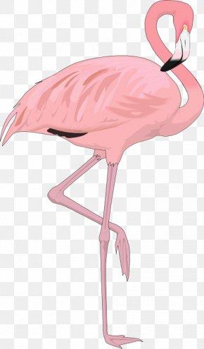 Ostrich - Flamingo Bird Clip Art PNG