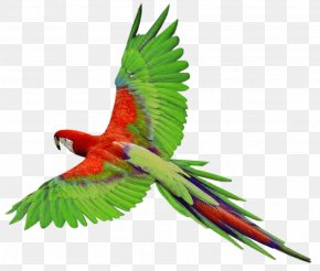 Flying Green Parrot Images Download - Parrots Of New Guinea Bird Clip Art PNG