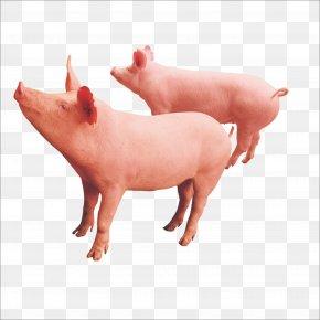 Pig - Livestock Download PNG
