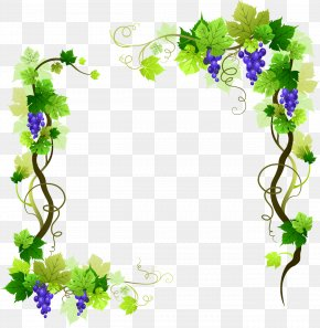 Grape Vine - Common Grape Vine Vector Graphics Stock Illustration PNG
