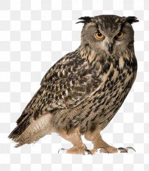 Owls - Eurasian Eagle-owl Snowy Owl Great Horned Owl Bird PNG