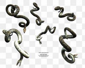 Anaconda - Snake Reptile DeviantArt PNG