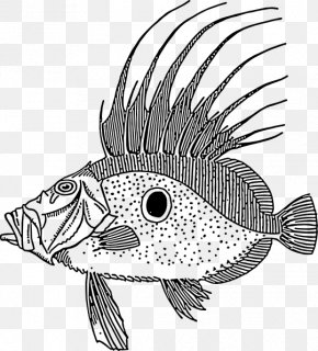 drawing fish line art clip art png 958x1059px drawing art artwork beak black download free drawing fish line art clip art png