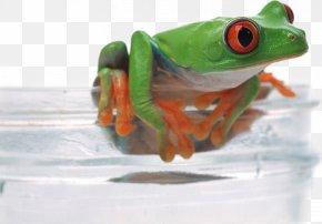 Frog On Glass - Frog Download Desktop Environment Wallpaper PNG