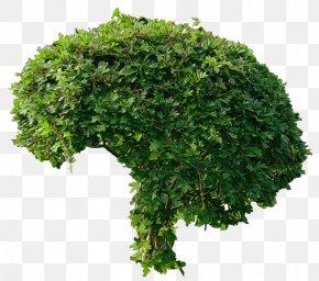 Bush Image - Tree Shrub DeviantArt PNG