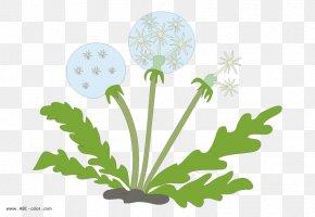 Drawing Common Dandelion Cartoon Clip Art PNG