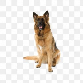 Sitting In The Police Dog - Dog Health Dietary Supplement Pet Veterinarian PNG