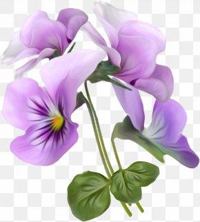 Beautiful Bouquet - Viola Tricolor Flower Clip Art PNG