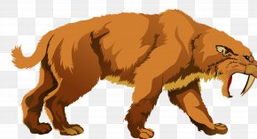 Lion - Lion Tiger Machairodontinae Saber-toothed Cat PNG