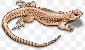 Lizard - Komodo Dragon Lizard Reptile Chameleons Clip Art PNG
