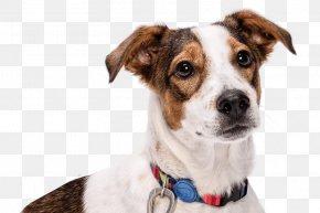 Dog - Dog Breed Leash Dog Collar PNG