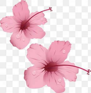 Flowers With Water Droplets - Pink Flowers Rose Clip Art PNG