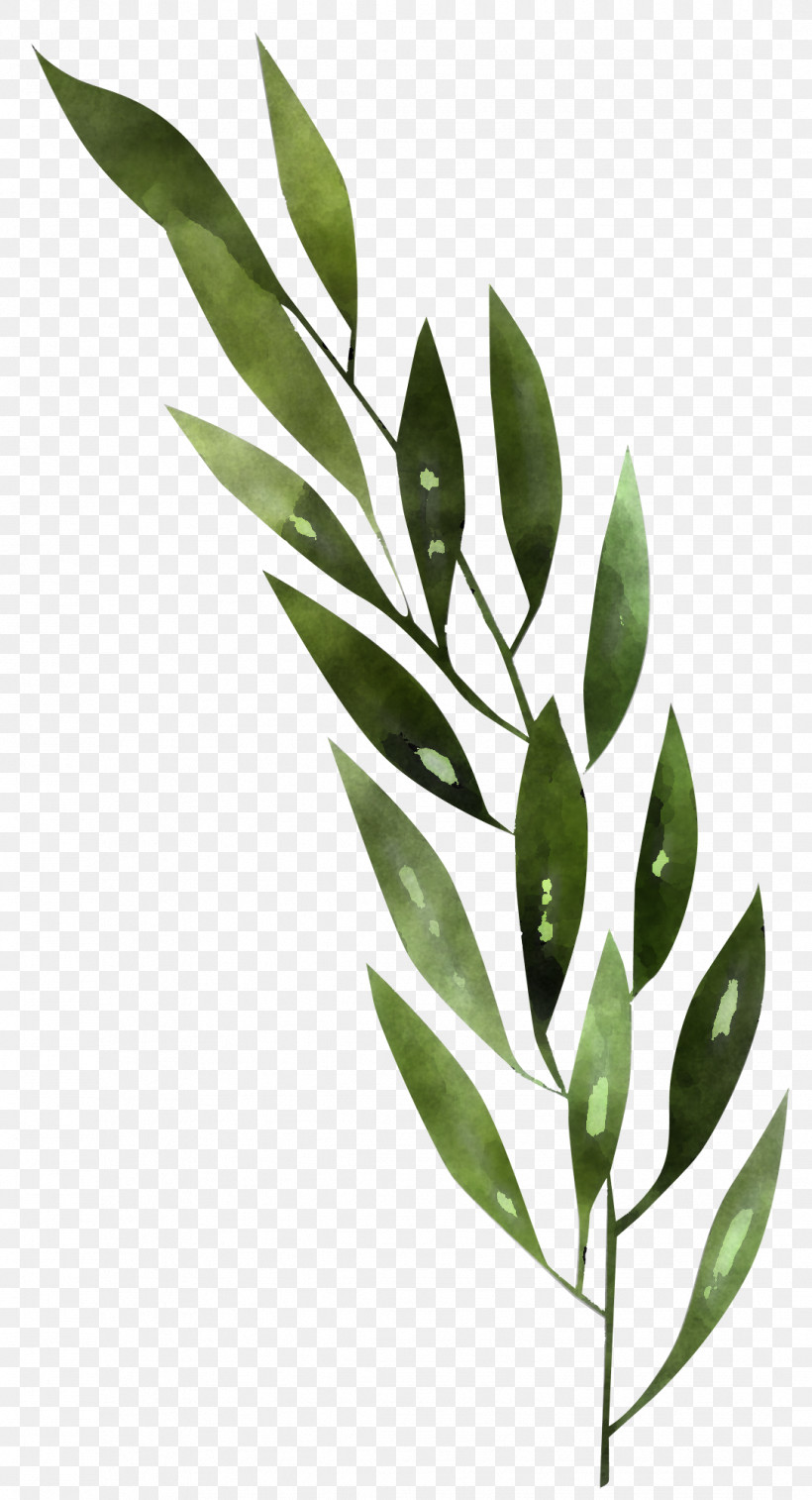Leaf Plant Flower Tree Branch, PNG, 1083x2000px, Leaf, Bay Leaf, Branch, Curry Tree, Eucalyptus Download Free