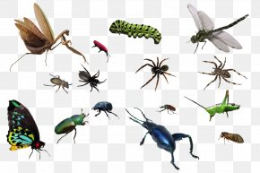 Spiders And Insects - Insect PNG
