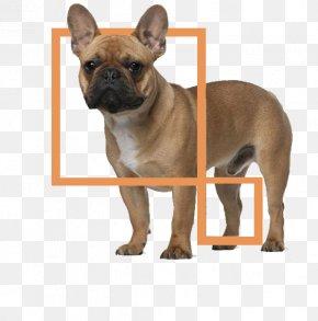 Bulldog - Jack Russell Terrier Greyhound Puppy Dog Harness Dog Collar PNG