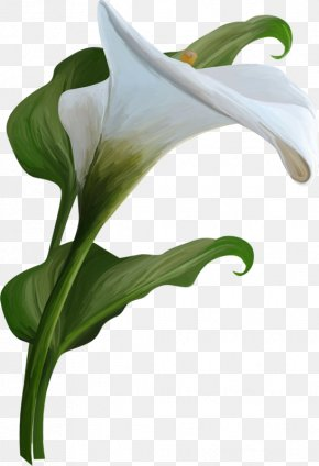 Watercolor Flowers Background - Arum-lily Calla Flower Clip Art PNG