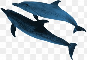 Sea Animals - Spinner Dolphin Striped Dolphin Common Bottlenose Dolphin Porpoise Rough-toothed Dolphin PNG