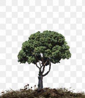 Landscape Size - Tree Landscape Download PNG