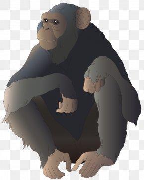Cartoon Gorilla - Common Chimpanzee Gorilla Monkey Ape Illustration PNG