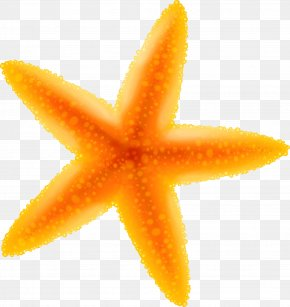 Yellow Cartoon Starfish - Starfish Cartoon Benthic Zone PNG