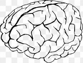 Brain Cliparts - Brain Free Content Clip Art PNG