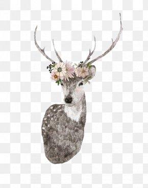 Deer Decorative Material - Deer Drawing Moose Elk Illustration PNG