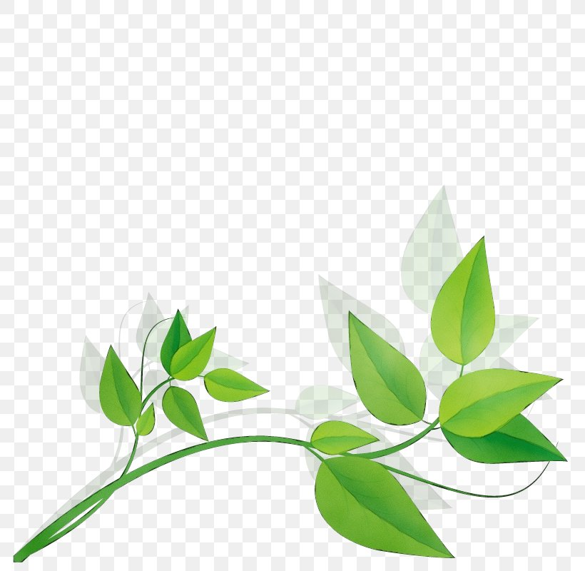 Leaf Green Plant Flower Branch, PNG, 800x800px, Watercolor, Branch, Flower, Green, Herbal Download Free