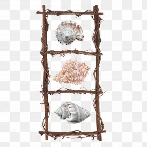 Ladder - Picture Frames Wood Photography Clip Art PNG