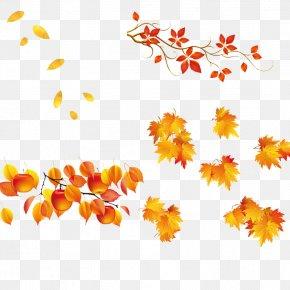 Leaf - Leaf Autumn PNG