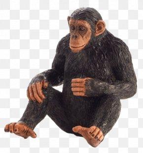 Chimpanzee - Common Chimpanzee Primate Monkey Gorilla Knuckle-walking PNG