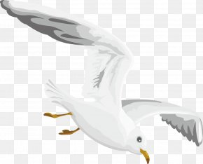 Flying Seagull Decoration Design - Gulls European Herring Gull PNG