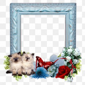 Picture Frame Dog - Background Frame Summer Frame PNG