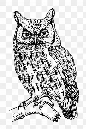 Line Drawing - T-shirt Owl Clothing Crew Neck PNG