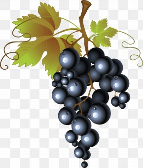 Grape Image Download, Free Picture - Common Grape Vine Wine Raisin Clip Art PNG