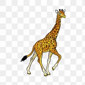 Giraffe - Fauna Of Africa Baby Jungle Animals Clip Art PNG
