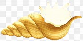 Computer File Pixel Vector Graphics Seashell PNG