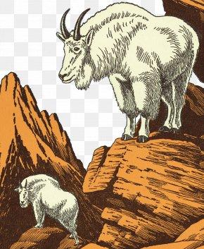 Plateau Goat Illustrator - Sheep Mountain Goat Cattle Illustration PNG