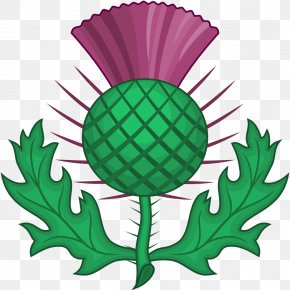 Thistle - National Symbols Of Scotland Order Of The Thistle Clip Art PNG