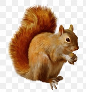 Squirrel Clipart - Red Squirrel Chipmunk Clip Art PNG
