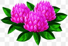 Cut Flowers Magenta - Flower Plant Petal Pink Common Peony PNG