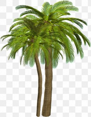 Palm Tree Drawing - Palm Trees Clip Art Adobe Photoshop File Format PNG