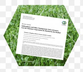 Phytochemistry - Sulforaphane Broccoli Sprouts Nutrigenomics Clinical Trial Medical Literature PNG