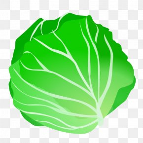 Cabbage Clip Art - Cabbage Vegetable Clip Art PNG