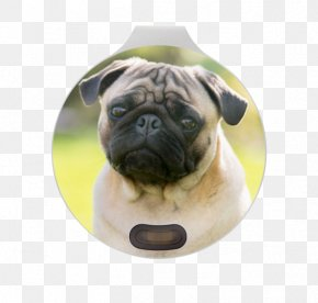 Pug - Pug Bulldog Puppy Dog Breed Eye PNG