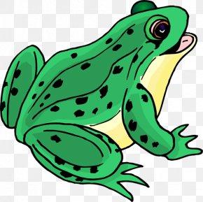 Frog Clip Art - Tree Frog Clip Art PNG
