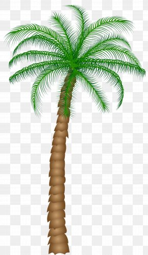 Palm Tree Clipart - Arecaceae Tree Clip Art PNG