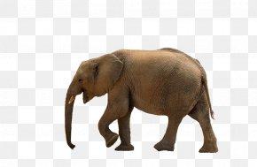 Elephant - Elephant Silhouette PNG