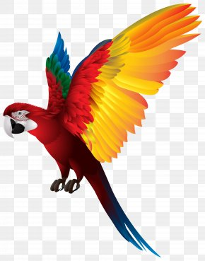 Parrot Transparent Clip Art Image - Red-breasted Pygmy Parrot Bird Clip Art PNG