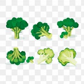 Vector Vegetables Cut Broccoli - Broccoli Vegetable Euclidean Vector Illustration PNG