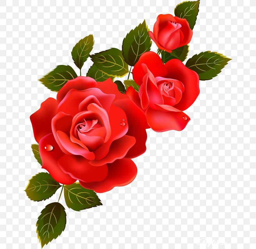 Garden Roses Information Flower Clip Art Png 670x798px Garden